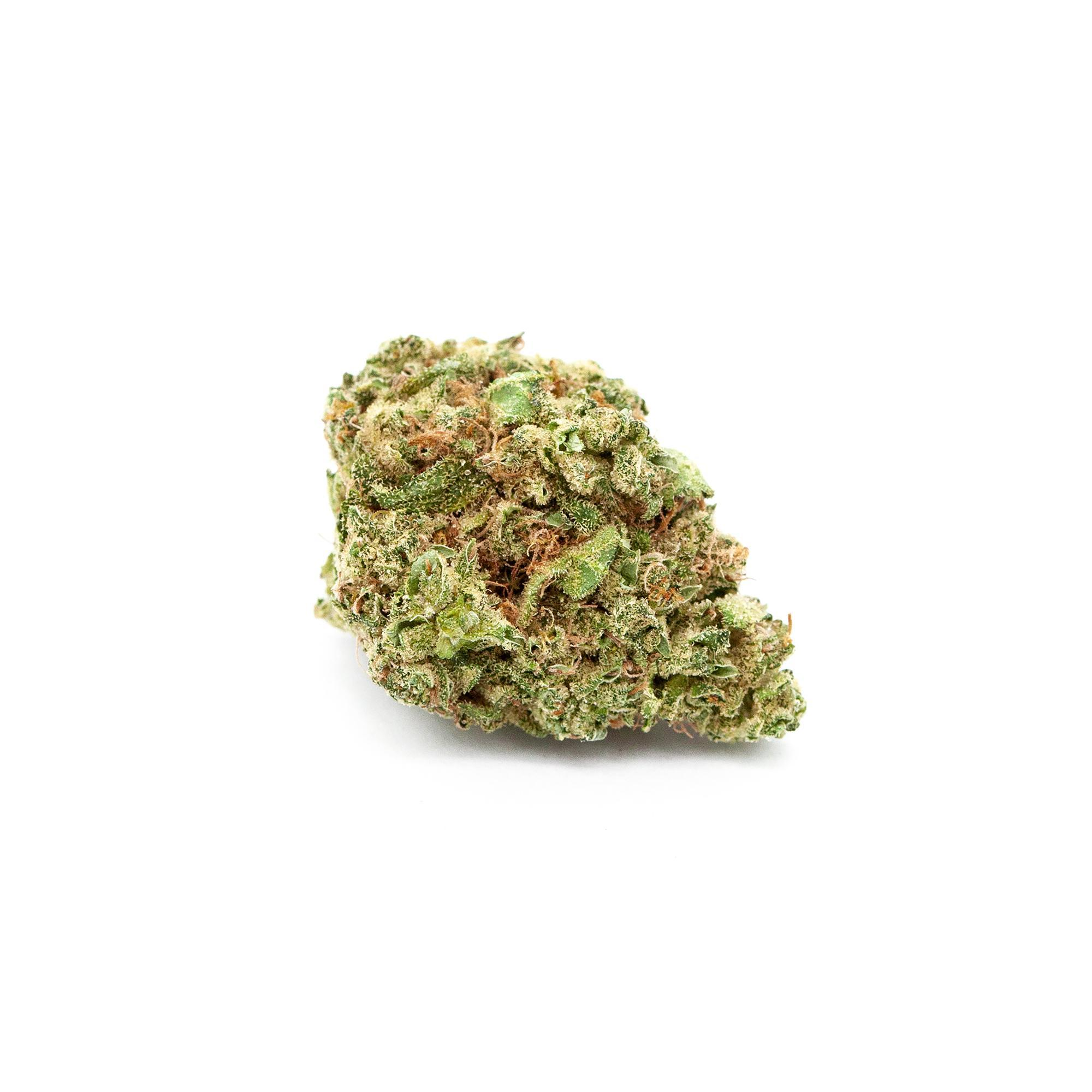 GNOME_RED_CONGO_BUD_WHITE